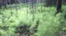 Bild på drömlikt grönt landskap i Norden.